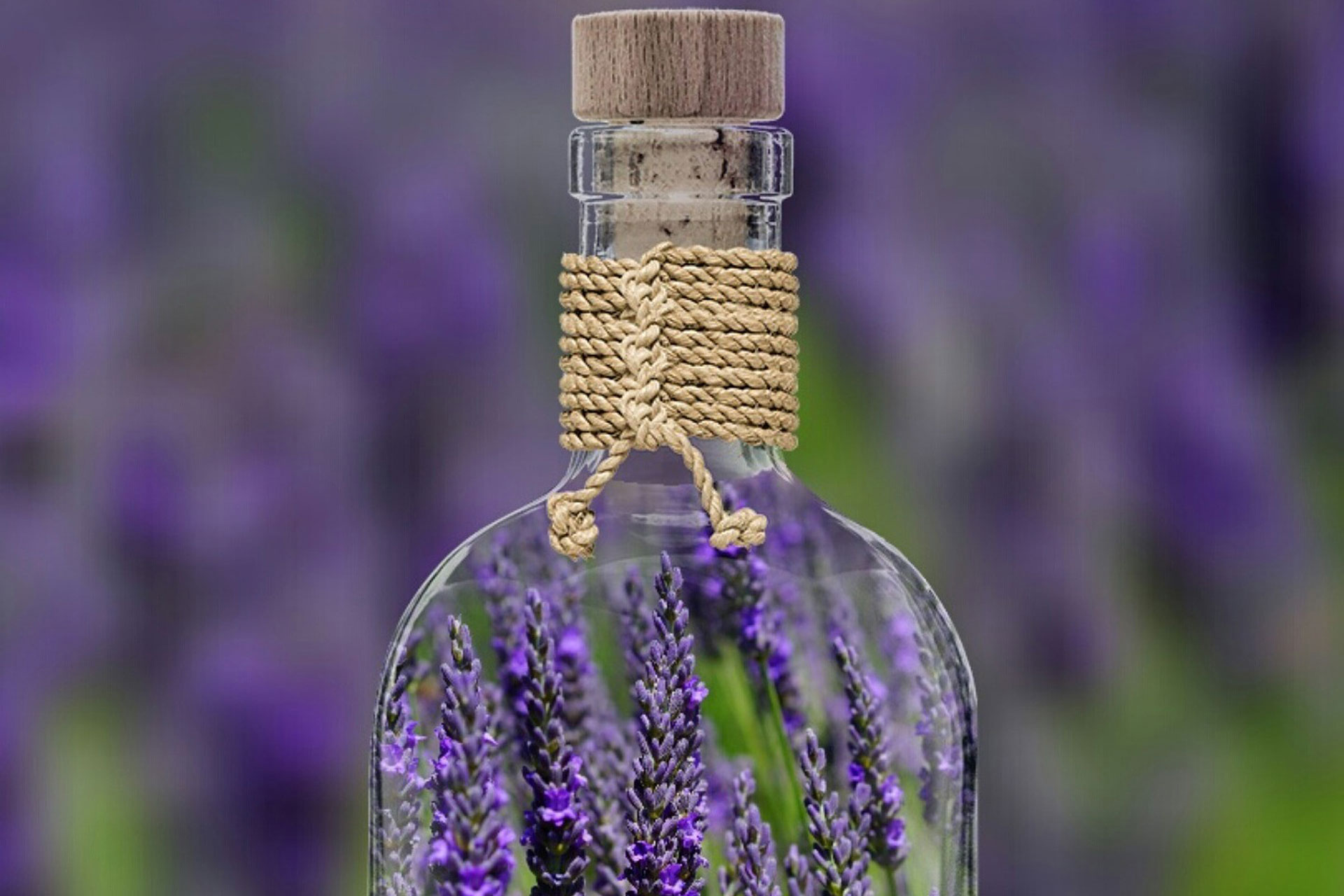 Lavender and Lavender Essential Oil Uses, Benefits and Information